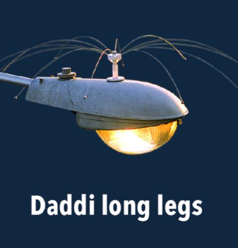 Daddi Long Legs, 1.25m diameter